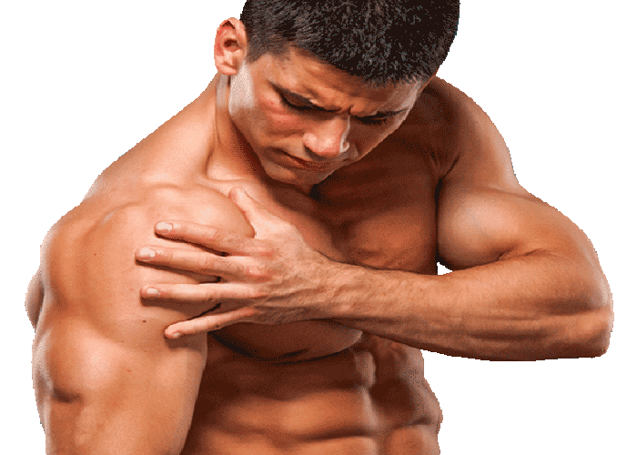 Repairs damaged Muscles